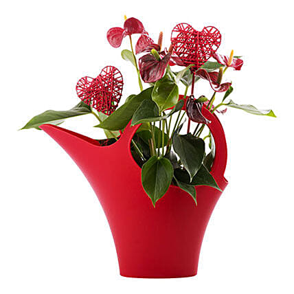 Flower Pot Love Gift: Plant Delivery in Germany