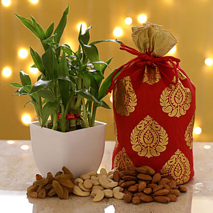 2 Layer Bamboo & Dry Fruits: Indoor Plants