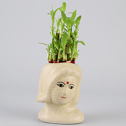 2 Layer Bamboo In Artistic Ceramic Pot: Home Decor Gifts Ideas