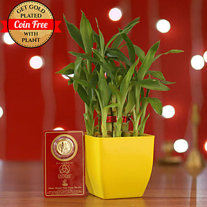 2 Layer Bamboo With Free Gold Plated Coin: