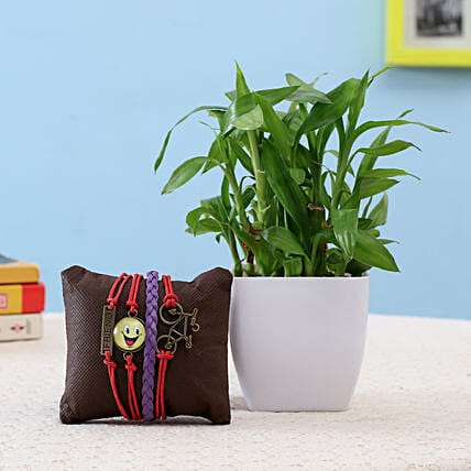 2 Layer Lucky Bamboo & Friendship Band: Desktop Plants