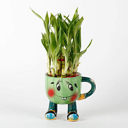 2 Layer Lucky Bamboo In Smiley Mug Green: Valentines Day Lucky Bamboo