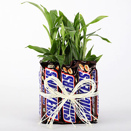 2 Layer Lucky Bamboo With Snickers: