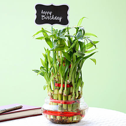 3 Layer Bamboo Plant For Happy Birthday: Send Plants for Birthday