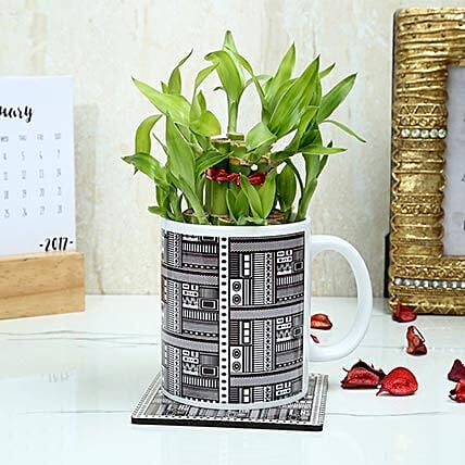A Cup Of Green: Lucky Bamboo Plants