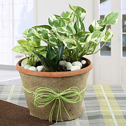 Air Purifying Dish Garden: Dish Gardens