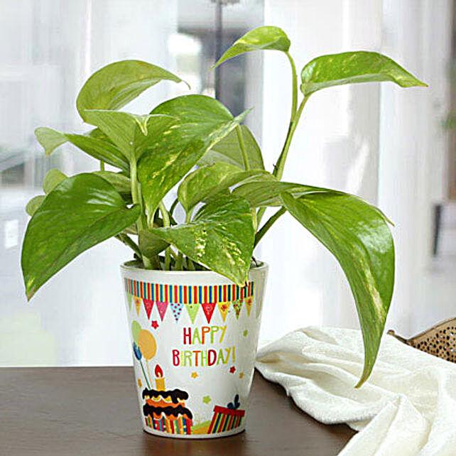 Birthday Special Plant: Spiritual and Vastu Plants