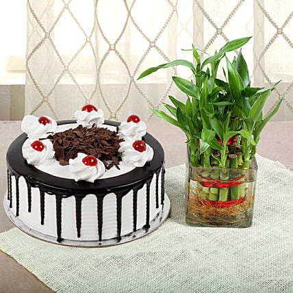 Blackforest Cake N Two Layer Bamboo Plant: Doctors Day Gifts