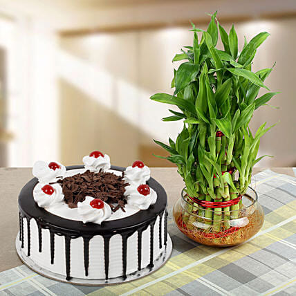 Blackforest Cake With Three Layer Bamboo Plant: Lucky Bamboo Plants