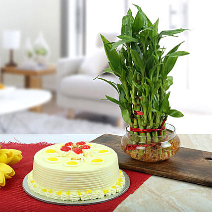 Butterscotch Cake With Three Layer Bamboo Plant: Lucky Bamboo Plants
