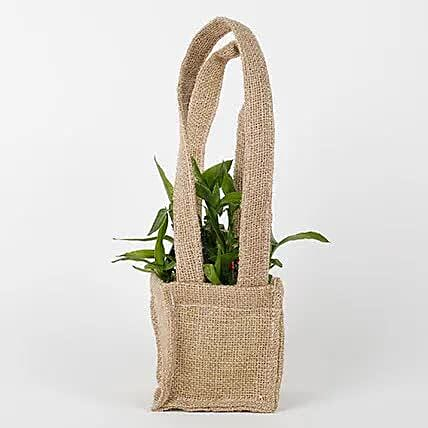 Carry Lucky Bamboo Plant Around: Send Spiritual Gifts