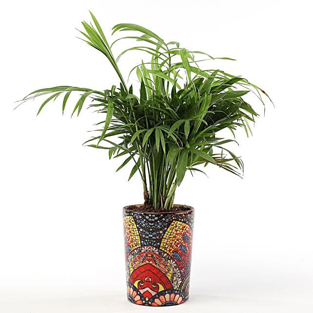 Chamaedorea Plant with Printed Ceramic Vase: Ornamental Plant Gifts