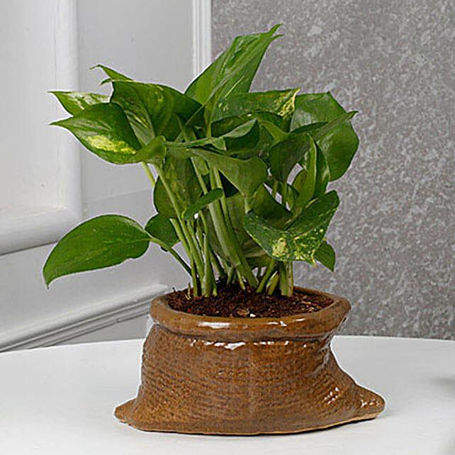 Cheerful Money Plant: Money Plant