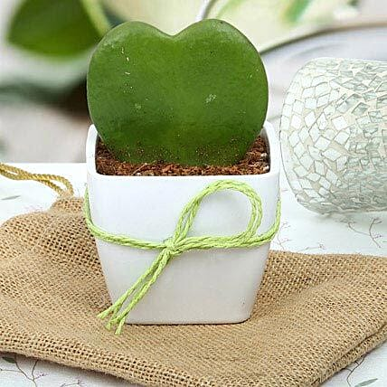 Cute Love Plant: Home Decor