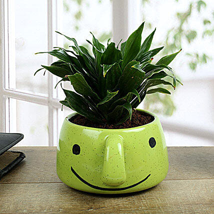 Dracaena Compacta In Smiley Vase: