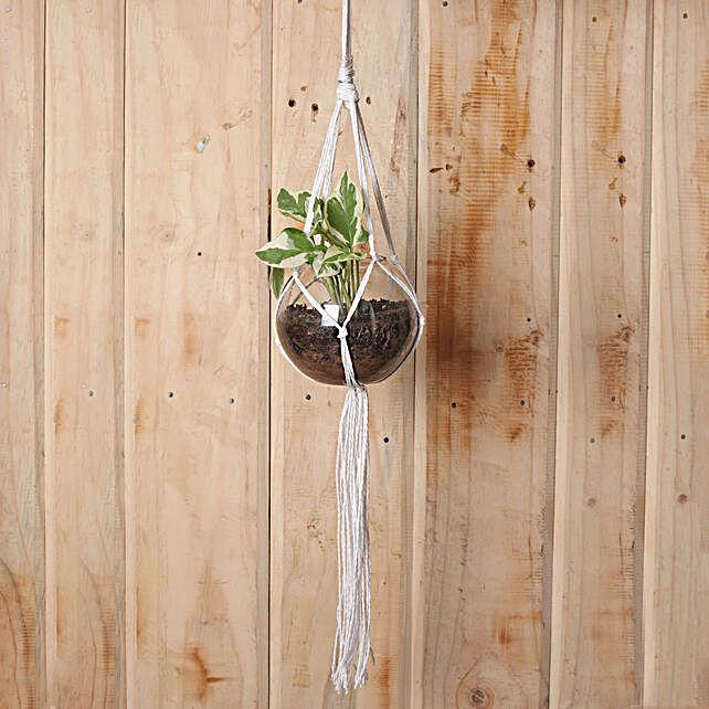 Exquisite White Pothos Hanging Terrarium Plant: Hanging Plants