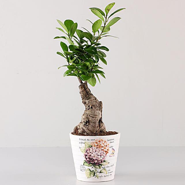 Ficus Bonsai In Lavender Découpage Planter: Buy Indoor Plants
