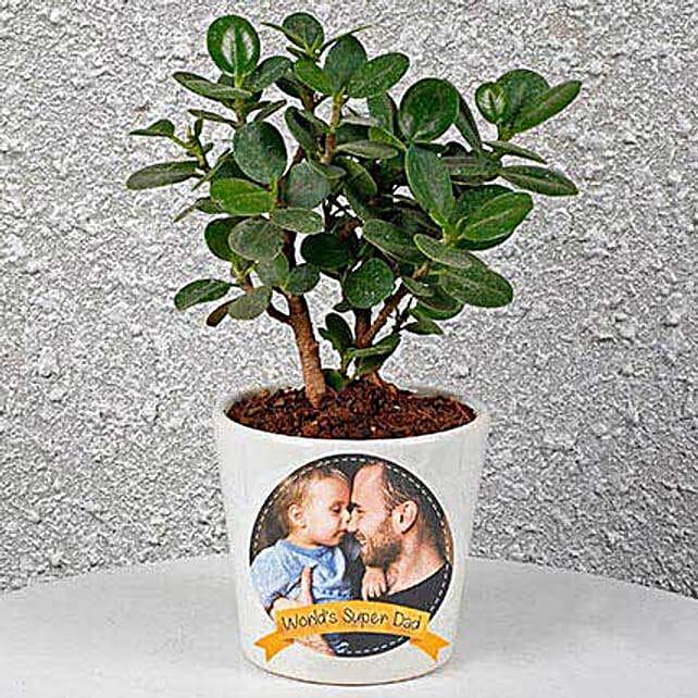 Ficus Compacta In Personalized Pot:
