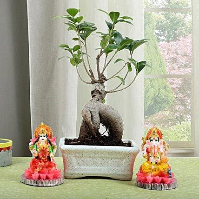 Ficus Micro Carpa Bonsai Combo: Spiritual Gifts