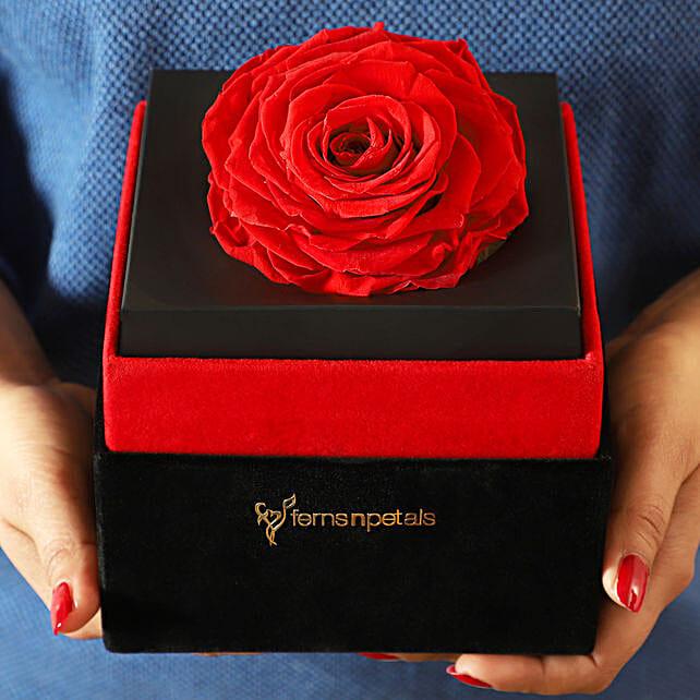 Big Forever Red Rose in Black Velvet Box: Valentines Day Flowers