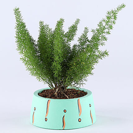 Foxtail Asparagus Fern In Green Concrete Pot: Exotic Plants
