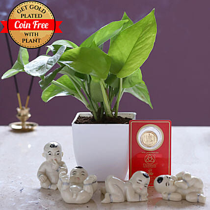 Free Gold Plated Coin & Money Plant White Pot: Ornamental Plant Gifts