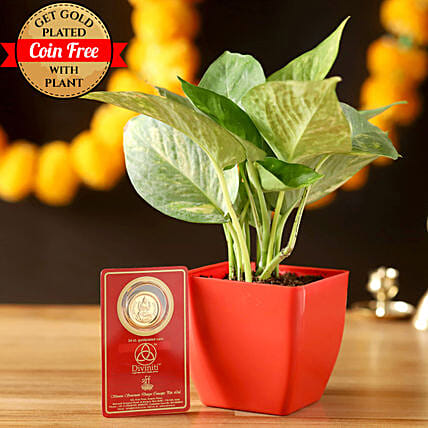 Free Gold Plated Coin & Money Plant: Best Outdoor Plant