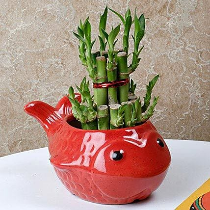 Gorgeous Lucky Bamboo Plant: Feng Shui Gifts