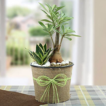 Green Home Decor Dish Garden: Air Purifying Plants