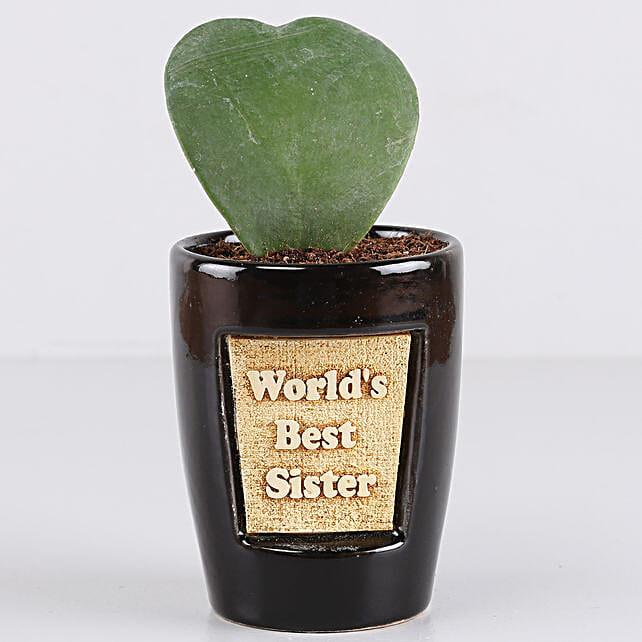 Hoya Plant For Best Sister: Send Shrubs