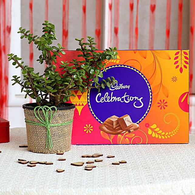 Jade Plant & Cadbury Celebrations Combo: Cadbury Chocolates