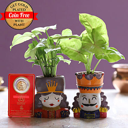 King Queen Syngonium Plant & Free Gold Plated Coin: Spiritual Plant
