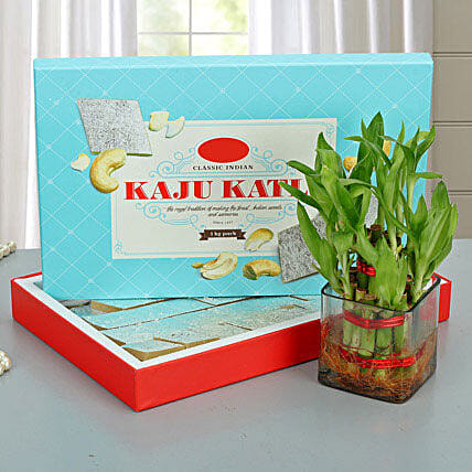 Lucky Wishes with Kaju Barfi: Bamboo Plants