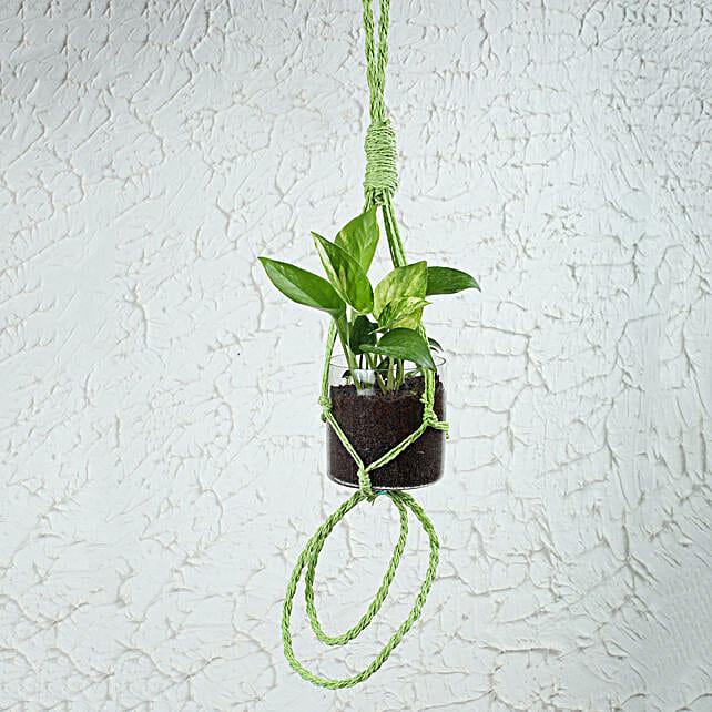 Lush Money Plant Terrarium: