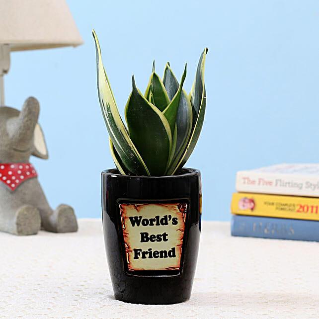 MILT Sansevieria For Best Friend: Good Luck Plants - Friendship Day