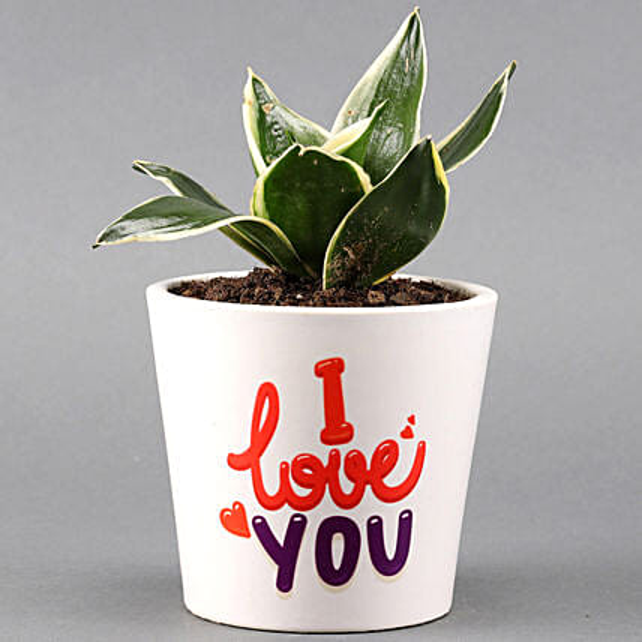 MILT Sansevieria In I LOVE YOU Pot: Valentine Plants