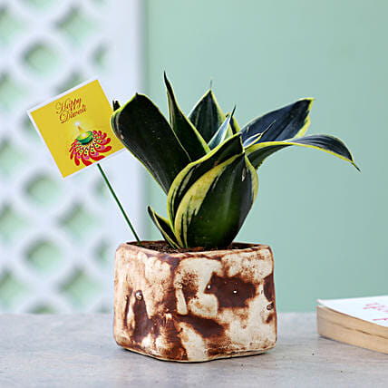 MILT Sansevieria Plant In Brown Stone Pot: Succulents and Cactus Plants