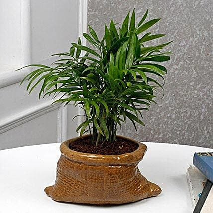 Modish Bamboo Palm Plant: Air Purifying Plants