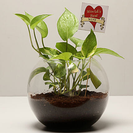 Money Plant For Best Wife: Send Plants for Karwa Chauth