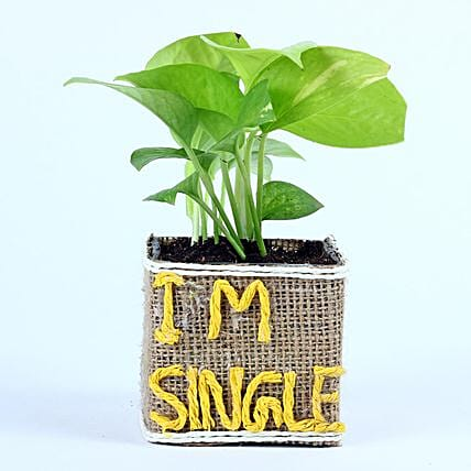 Money Plant For Singles Day: