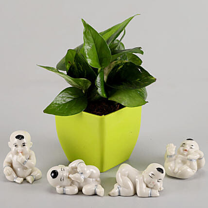 Money Plant in Green Pot & Baby Buddha Combo: Indoor Plants
