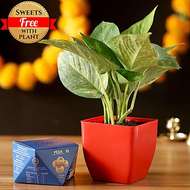 Money Plant & Misht Peda: Buy Sweets