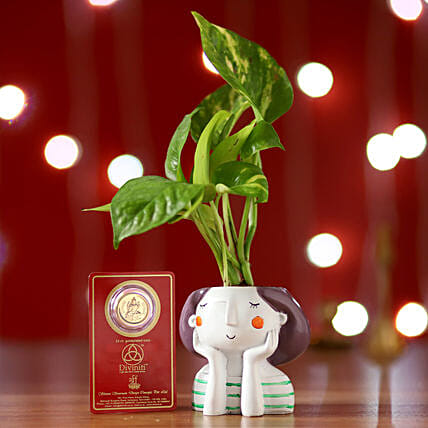 Money Plant Resin Pot & Free Gold Plated Coin: Ornamental Plant Gifts