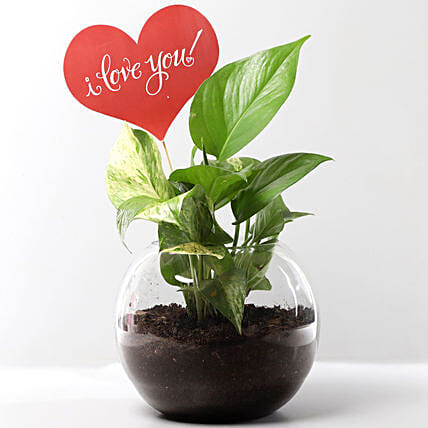 Money Plant Terrarium With Love You Tag: Karwa Chauth Gifts for Wife India