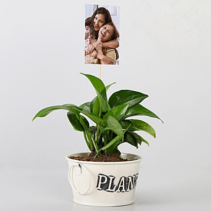 Money Plant With Your Personalised Picture: Buy Indoor Plants