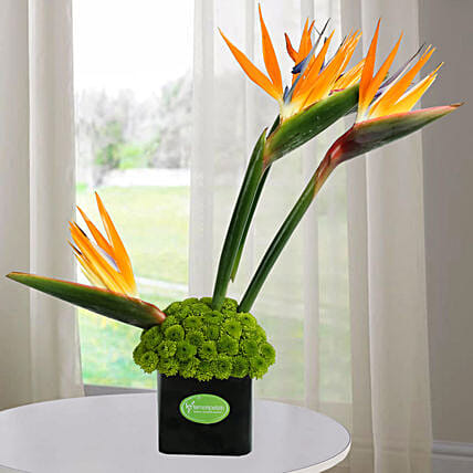 Orange Birds Arrangement: