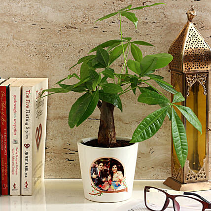Pachira Bonsai in Personalised Photo Ceramic Pot: Good Luck Plants