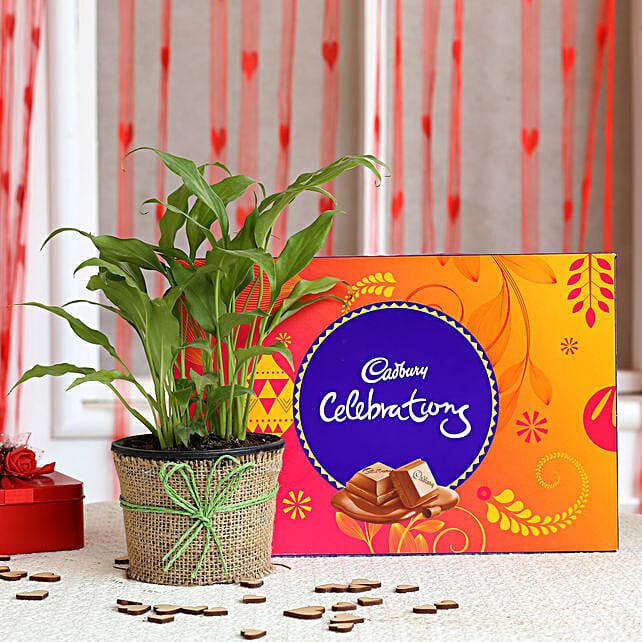 Peace Lily Plant & Cadbury Celebrations Combo: Cadbury Chocolates