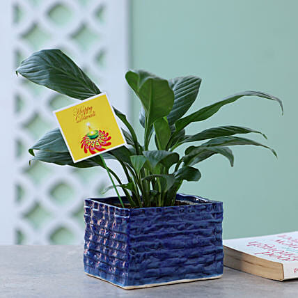 Peace Lily Plant For Diwali: Flowering Plants