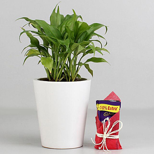Peace Lily Plant in Ceramic Pot with Cadbury Dairy Milk: Cadbury Chocolates
